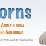 Mai più senza: ZooBorns