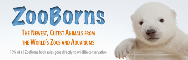 zoo borns