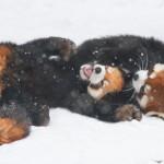 Pet-therapy per tutti: l'imprescindibile indirizzario delle carinerie zoologiche