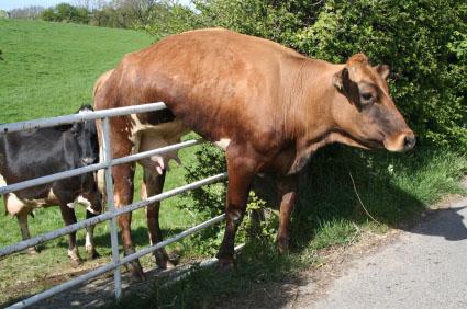 animal-stuck (4)