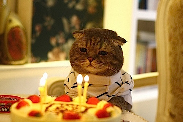 Gatto triste compleanno