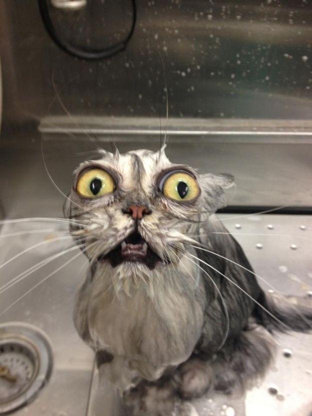 gatto bagnato
